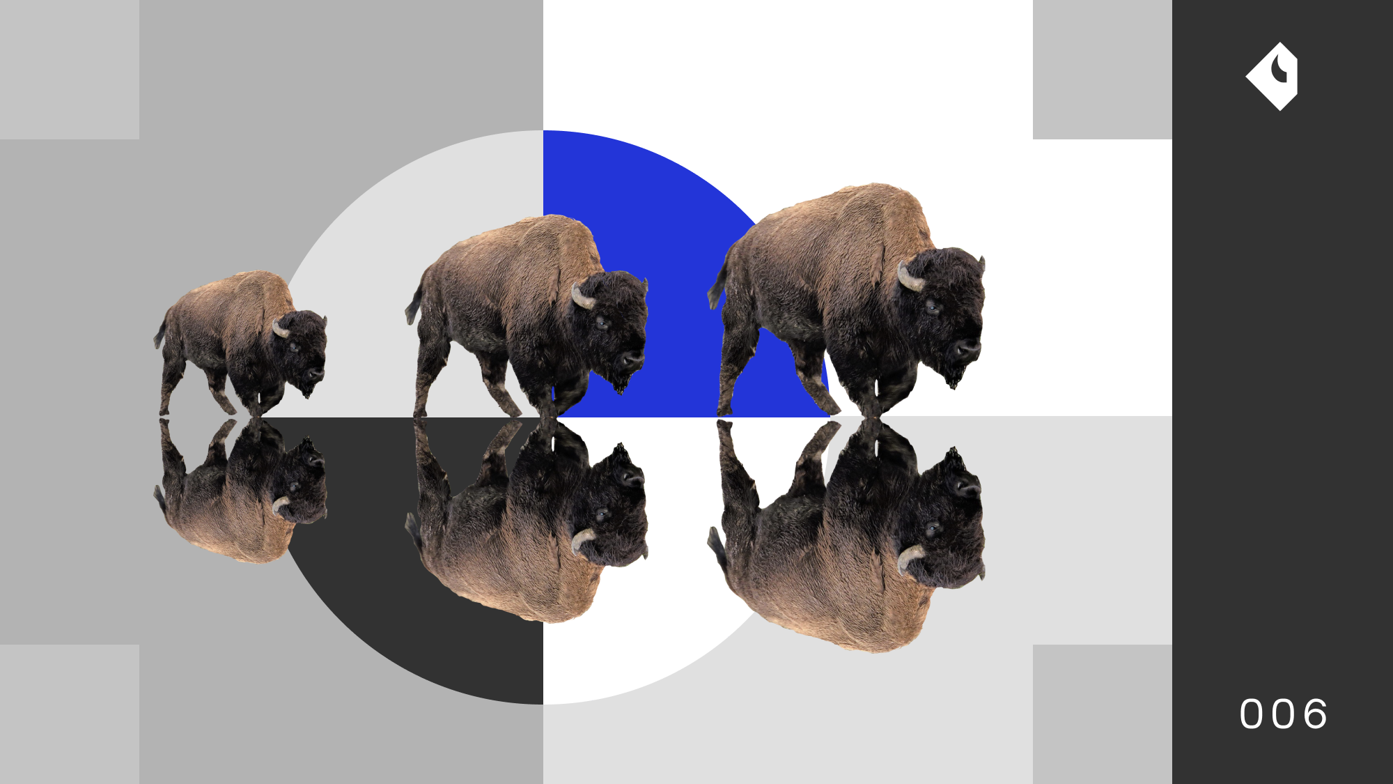 Bison Trails Newsletter 006 • July 2020